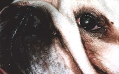 Success Stories – Northwest Animal Allergy & Dermatology